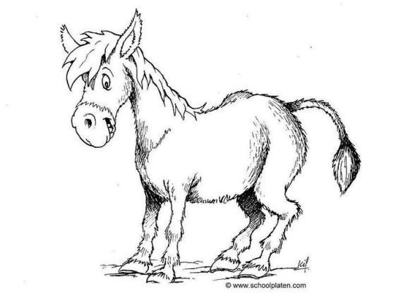 donkey-t4380
